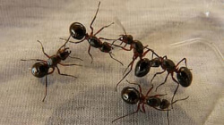 ant infestation extermination