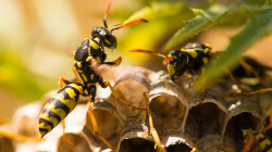 professional wasp control in the area