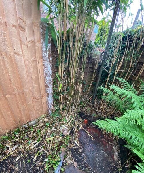 bamboo removal in Warrington