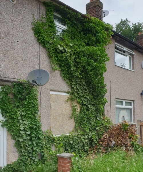ivy removal in st helens