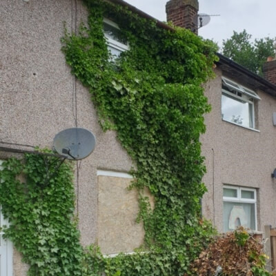 Expert ivy removal before