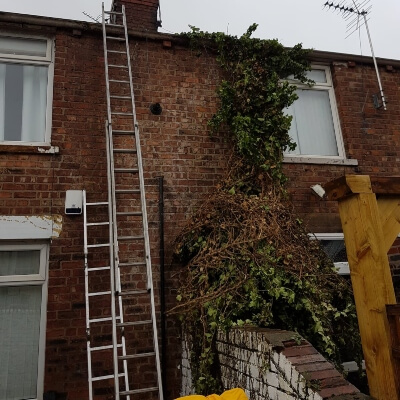 Ivy removal after