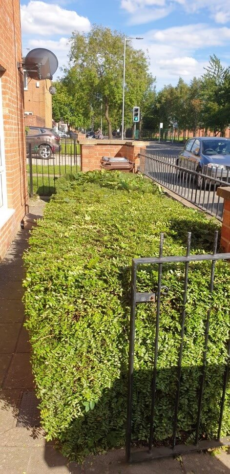 after hedge trimming salford