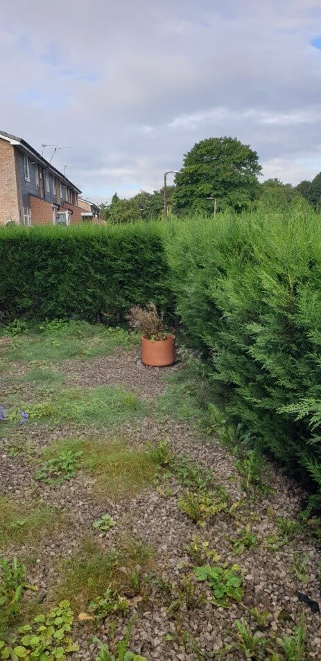 hedge pruning manchester