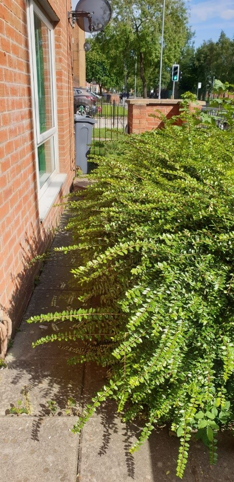 hedge trimming salford before