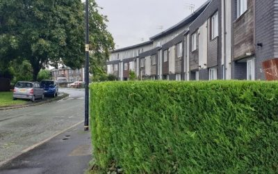 Hedge trimming in Manchester
