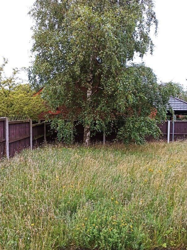 overgrown grass liverpool