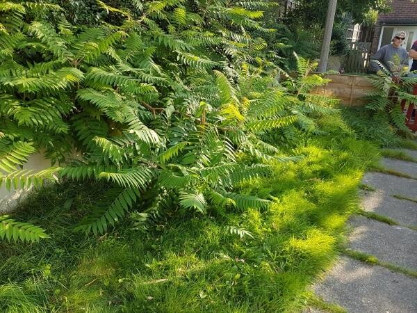local garden clearance experts near you