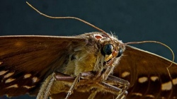 moth control experts near you