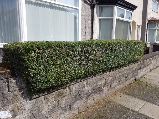 professional hedge trimming in wallasey