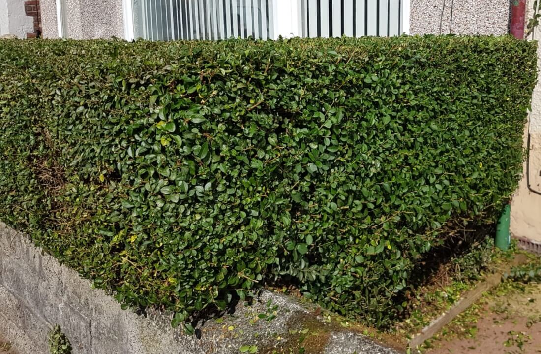 liverpool hedge trimming experts
